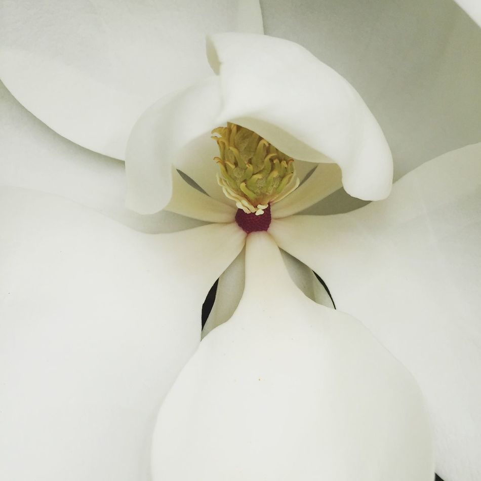 Simplicity Beauty In Nature Flower Petal Nature Close-up