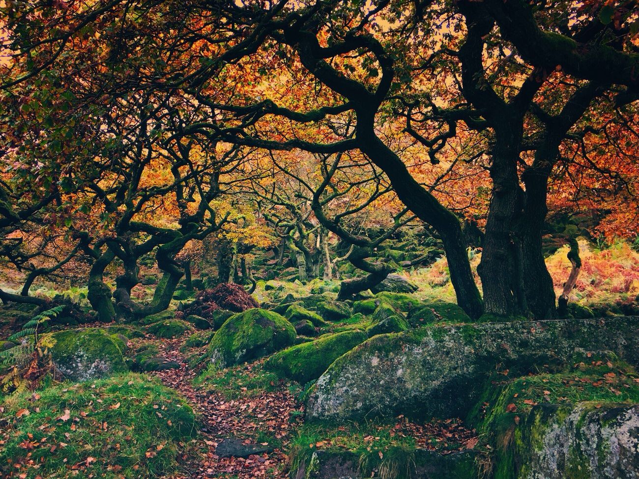 Padley Gorge Derbyshire PeakDistrict Peace And Quiet Tree Nature Beauty In Nature Tranquil Scene Autumn Tranquility Growth Outdoors Scenics No People Day Branch Landscape Leaf Water Sky Nature_collection Landscape_collection EyeEmNatureLover Nature Photography Eyem Best Shots Nature_collection Beauty In Nature Trees