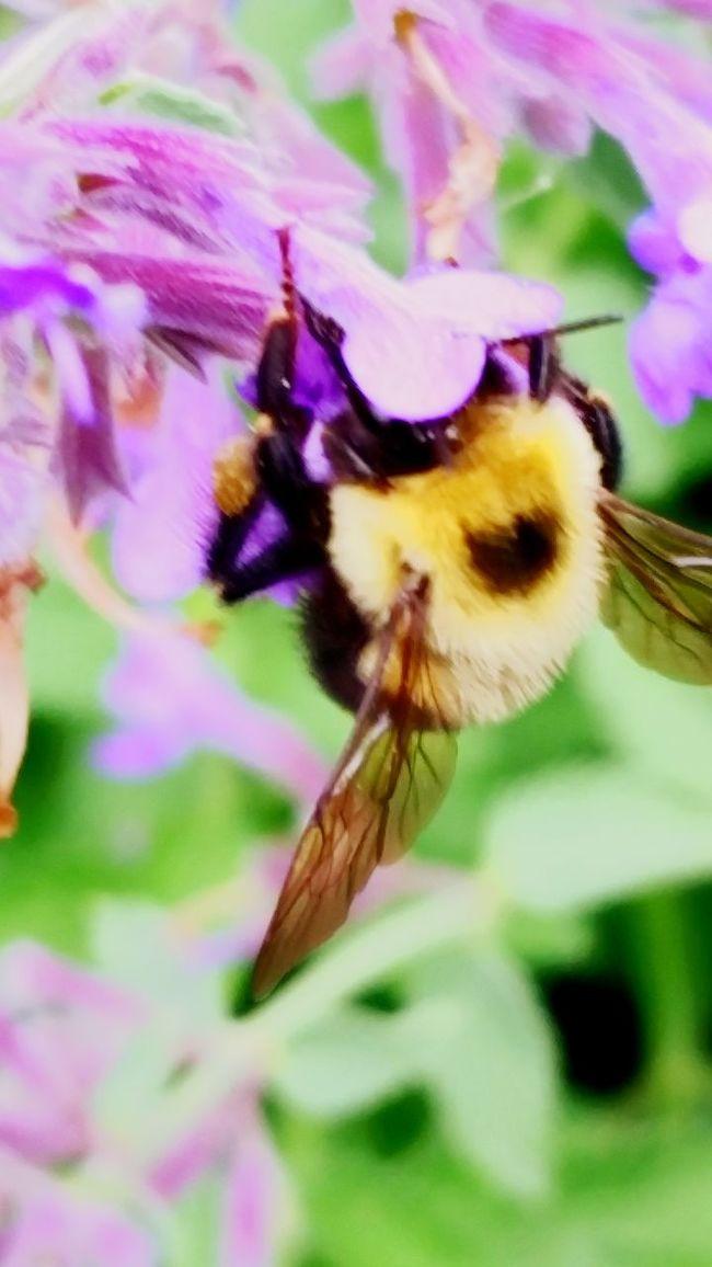 Bee Walking Around Taking Photos