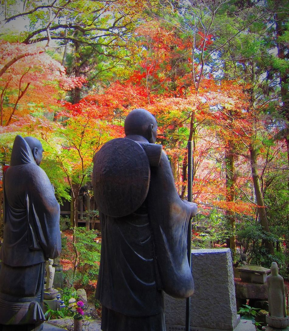 Mitaki Monks Autumn Beauty In Nature Buddhism Buddhist Monks Buddhist Temple Calm Change Guardians Hiroshima Japan Japanese Culture Japanese Garden Japanese Religion Leaf Men Mitaki Mitaki Temple Monkey Nature Outdoors Rear View Tree Watchful Zen fall beauty The Secret Spaces