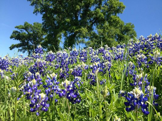 flowers at Cedar Hill State Park by Brian