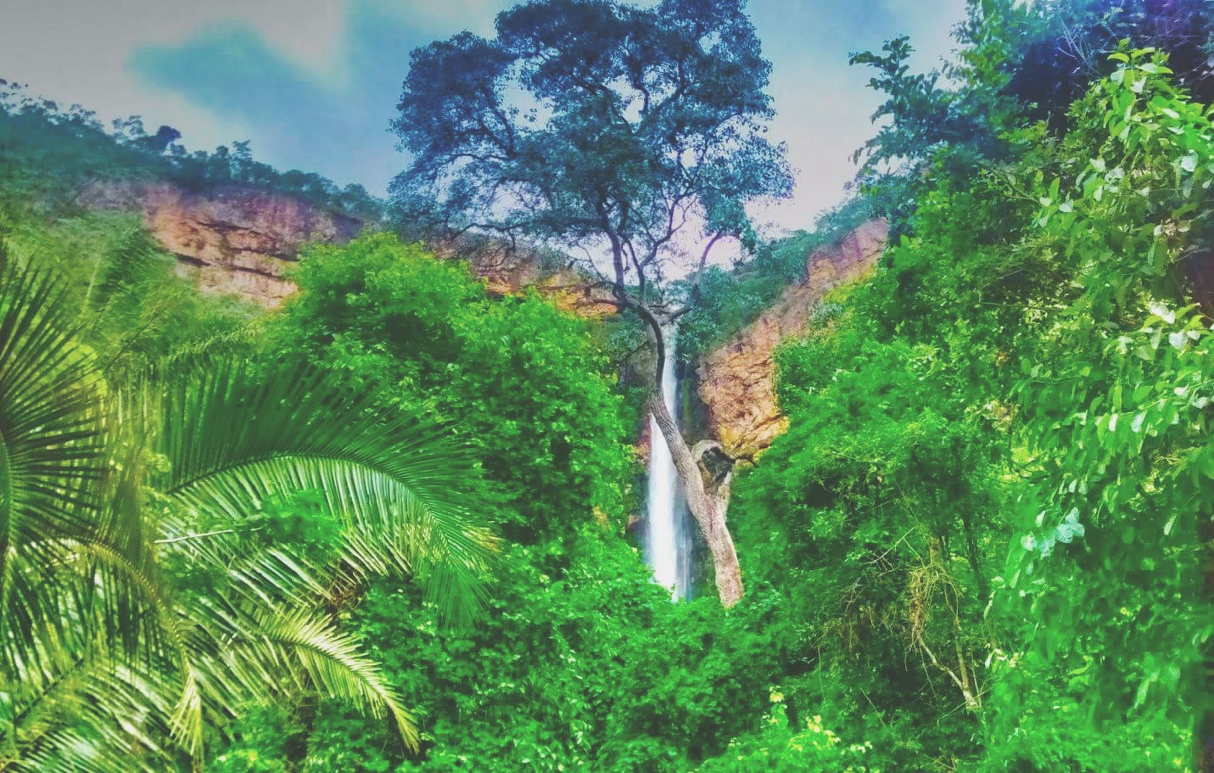 tree, beauty in nature, scenics, nature, growth, tranquility, green color, tranquil scene, forest, waterfall, idyllic, lush foliage, non-urban scene, sky, mountain, plant, day, landscape, green, outdoors