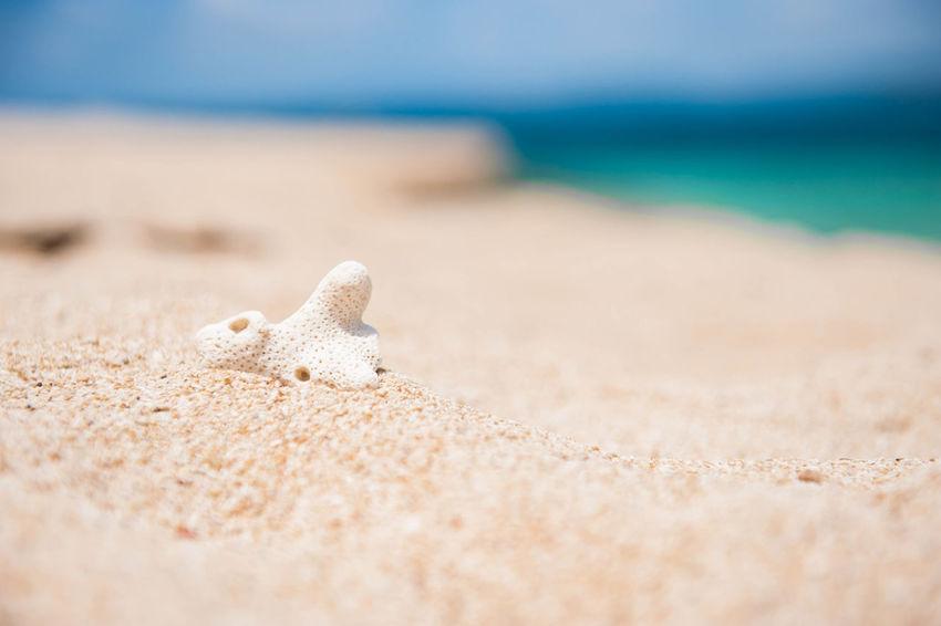 Beach Island Coral