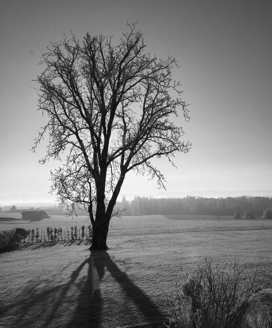 Old tree Nature Tree Beauty In Nature Outdoors No People Single Tree