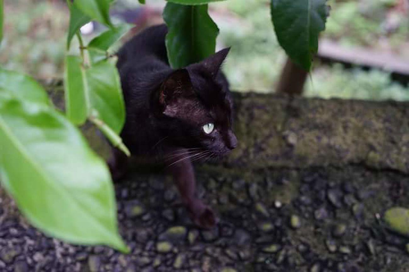 Cat Black Cat First Eyeem Photo