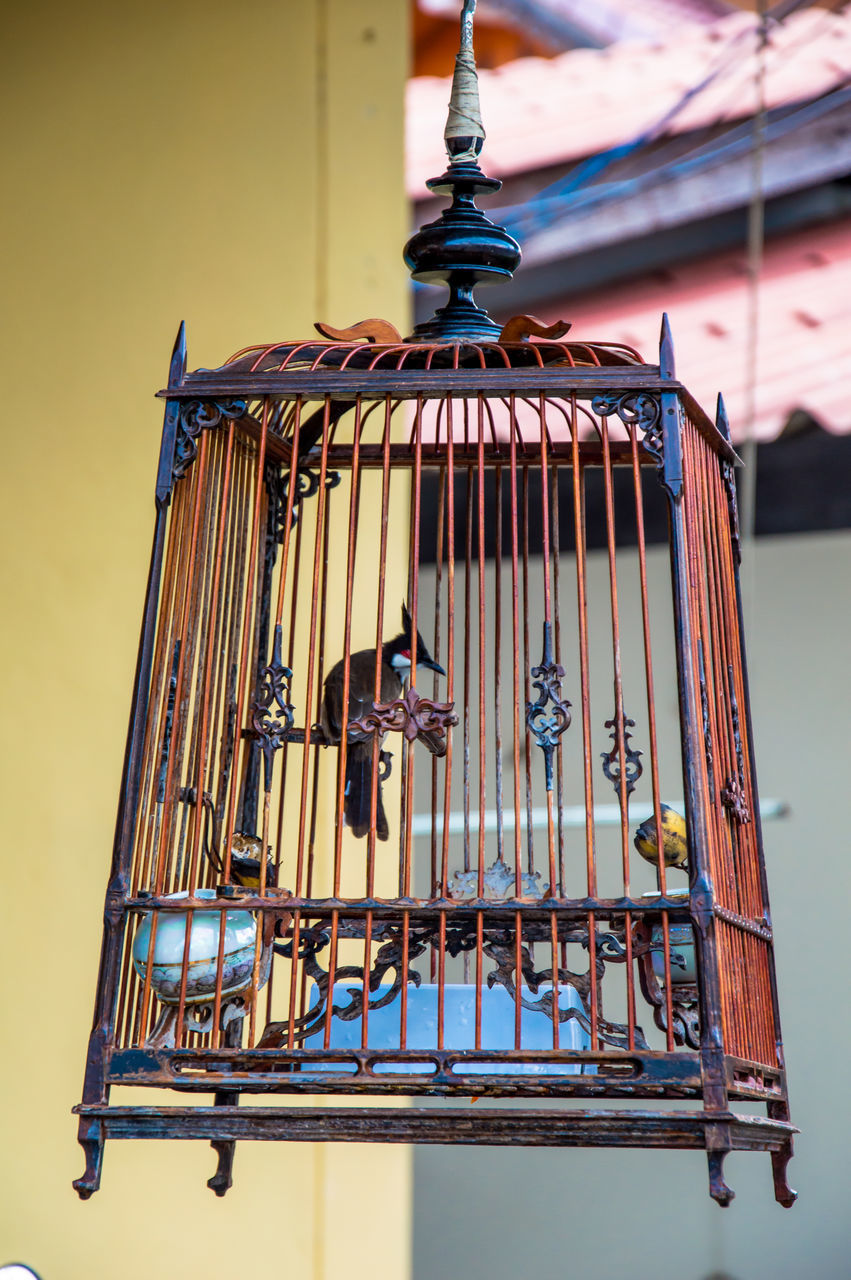 Bird In Ornate Metal Cage Hanging At Home