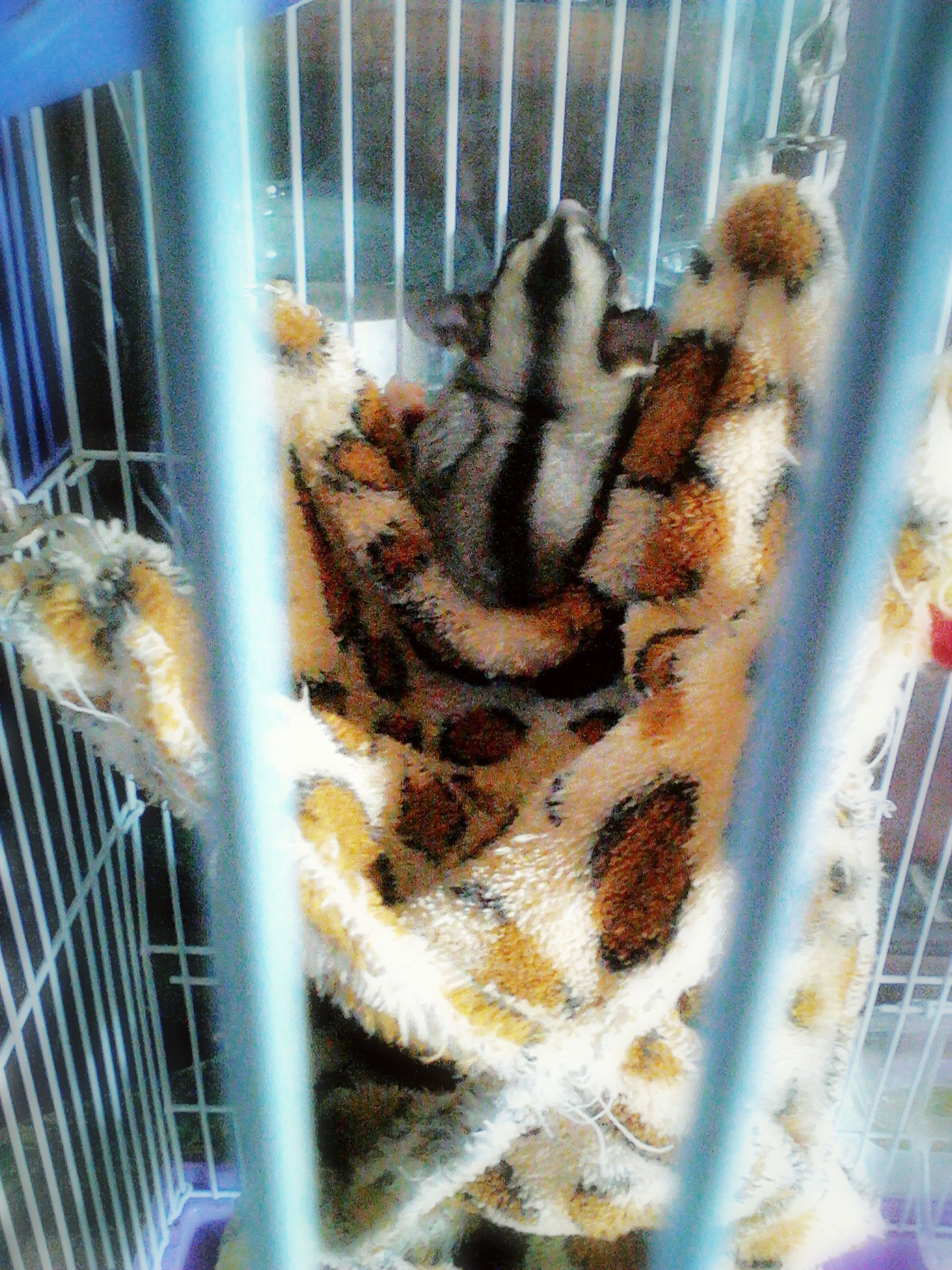 animal themes, indoors, close-up, animals in captivity, one animal, animals in the wild, wildlife, cage, fish, glass - material, metal, pattern, no people, trapped, day, sea life, selective focus, rope, transparent