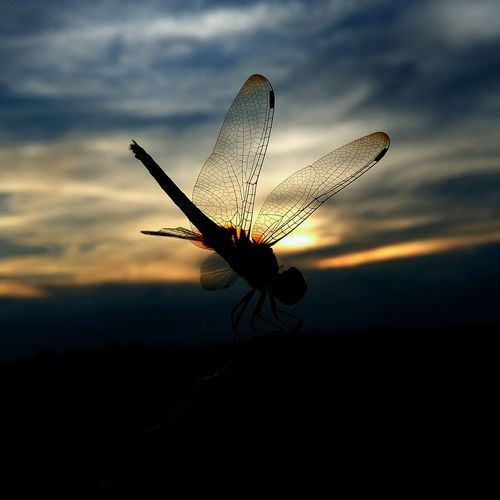 Sunset through the wings.. Sunset Roy's Eye Natural Beauty