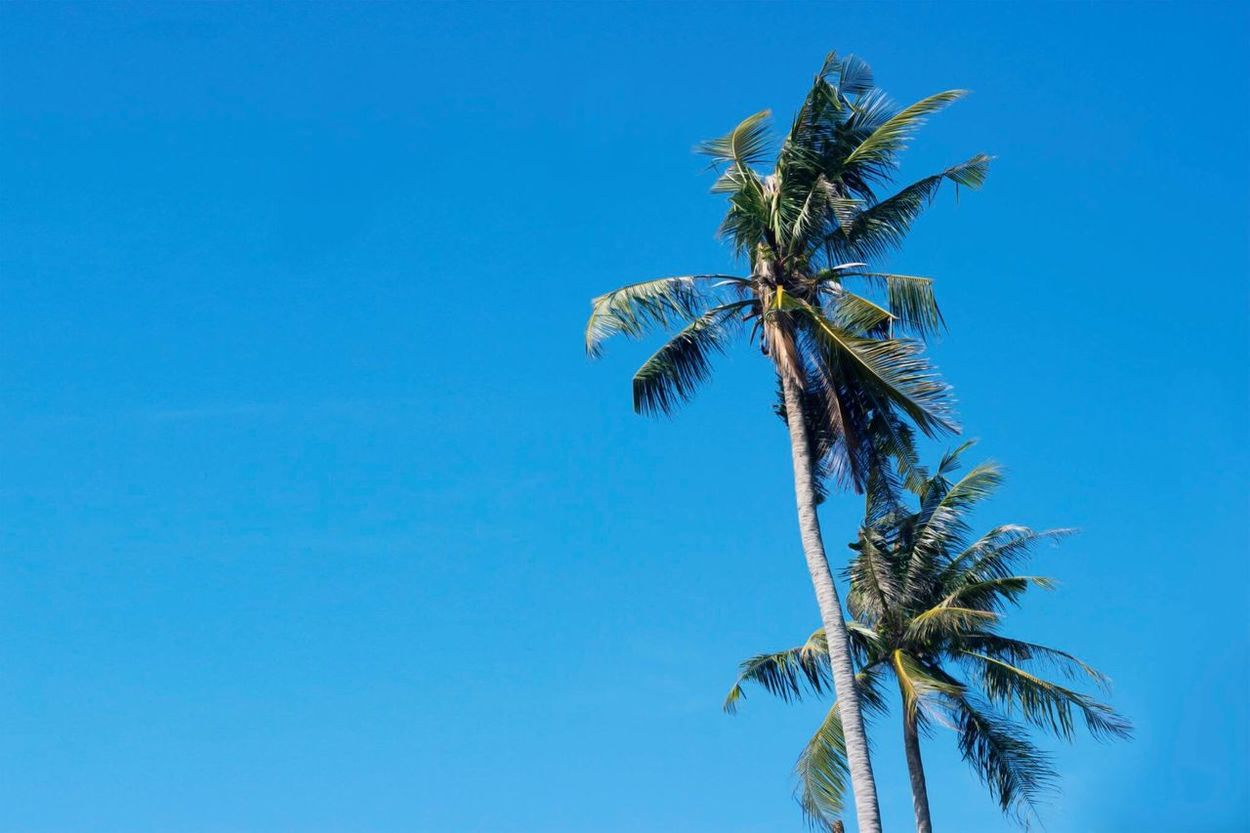Always summertime at the beach Blue Clear Sky Summertime Beach Palm Tree Tree Tropical Paradise Bright Daylight Island Sunny Day Landscape Travel Landscapes