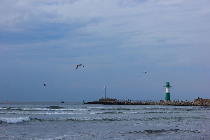 Warnemünde Sea Water Beach Bird Sky Nature Cloud - Sky No People Flying Wave Animal Themes Outdoors Day Seagull Scenics