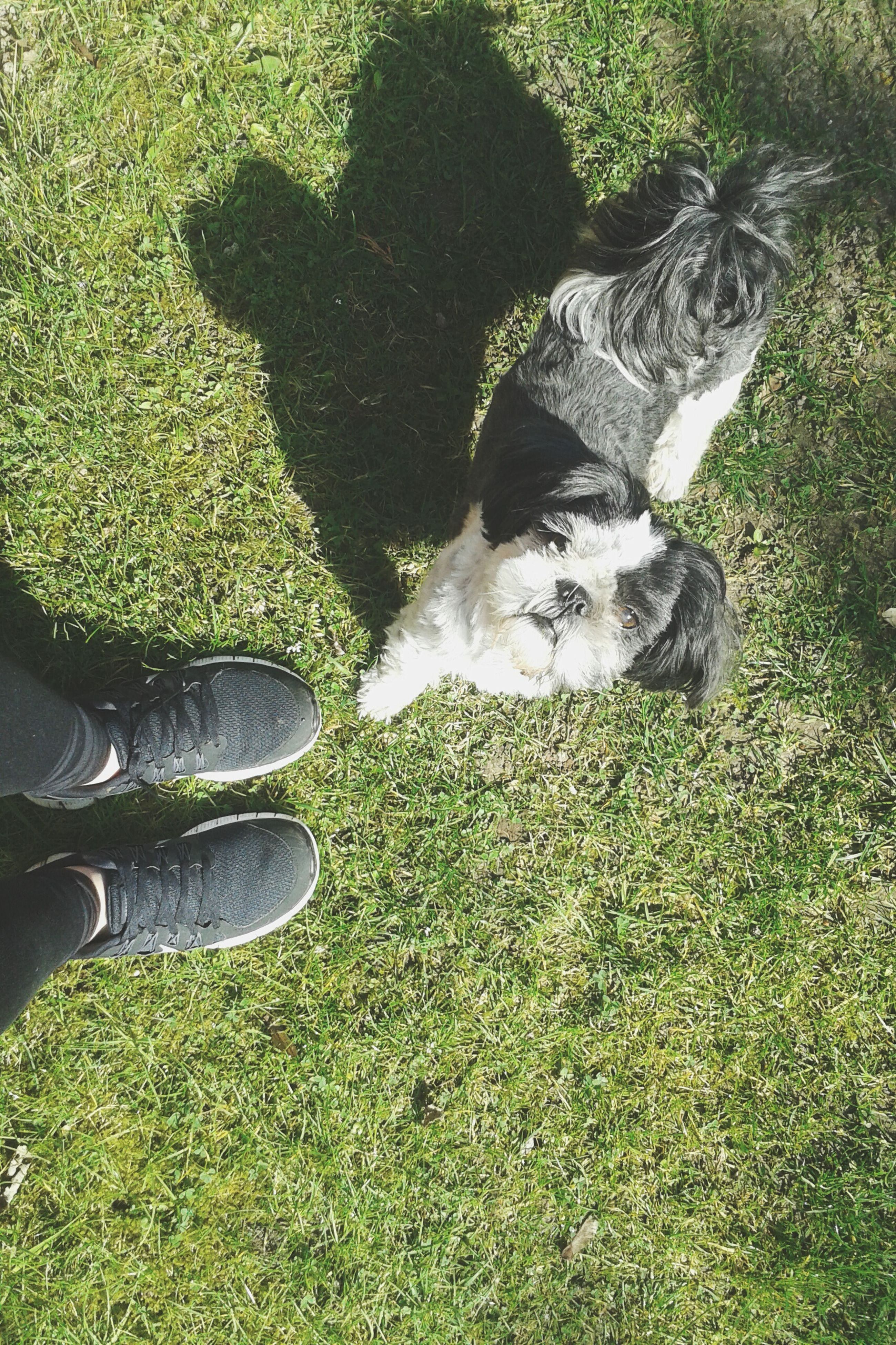 grass, low section, shoe, person, domestic animals, grassy, animal themes, field, high angle view, one animal, mammal, pets, personal perspective, unrecognizable person, standing, lifestyles, relaxation