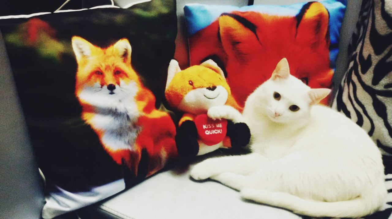 Pets Black And White White Cat Cat No People Fox Nice Cute Cute Pets Love Cat