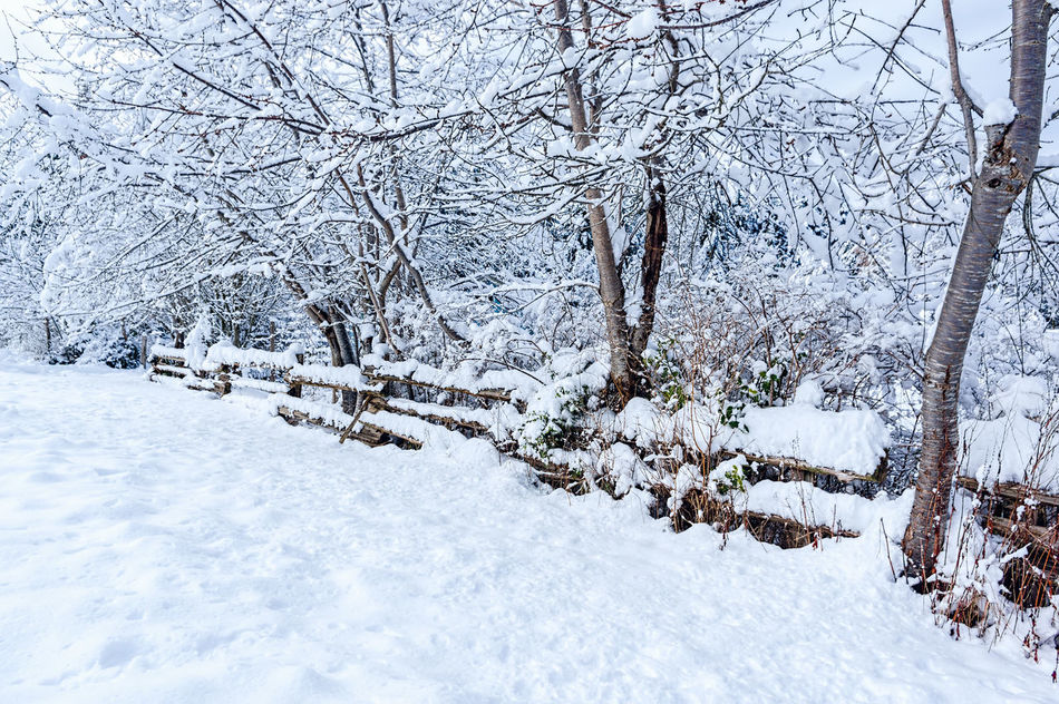 Beauty In Nature Branch Cold Temperature Day Forest Landscape Nature No People Outdoors Scenics Snake Fence Snow Snowdrift Snowing Tranquility Tree Weather White Color Winter