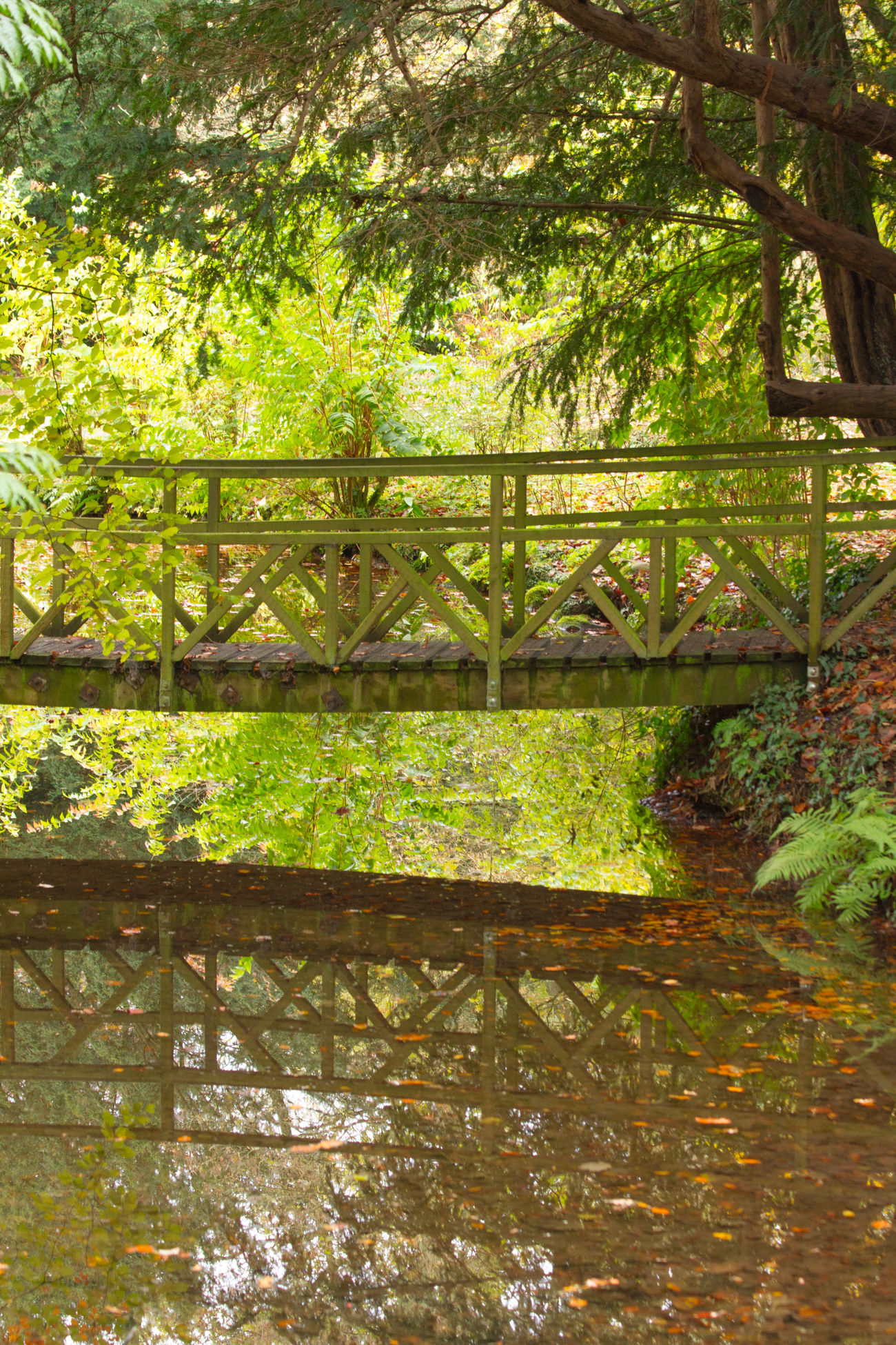 Bridge Gardens Green Park Pond Reflection Stream Tree Water Water Reflections WoodLand