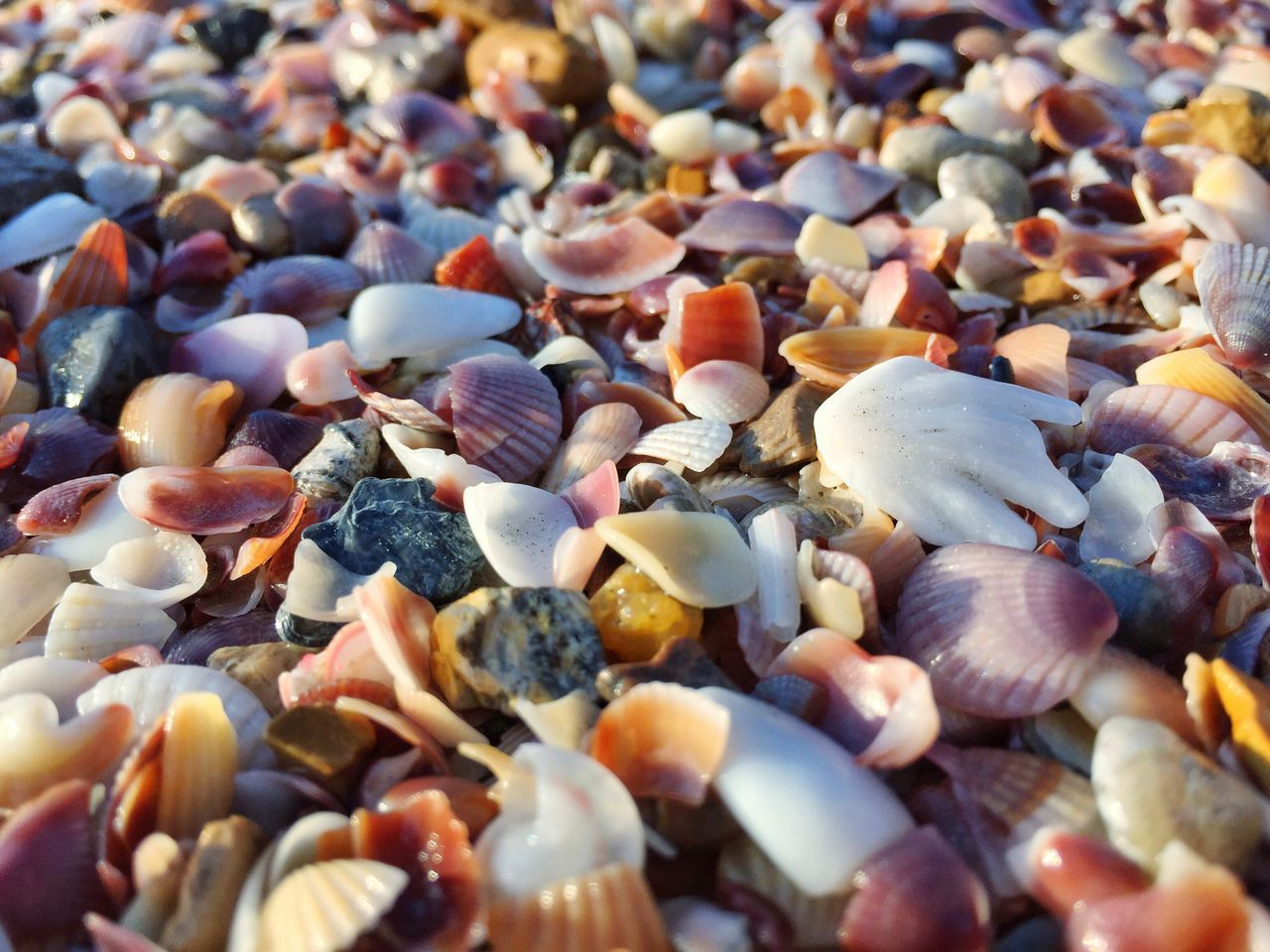 full frame, pebble, backgrounds, beach, abundance, no people, large group of objects, seashell, nature, outdoors, day, close-up, pebble beach, animal themes