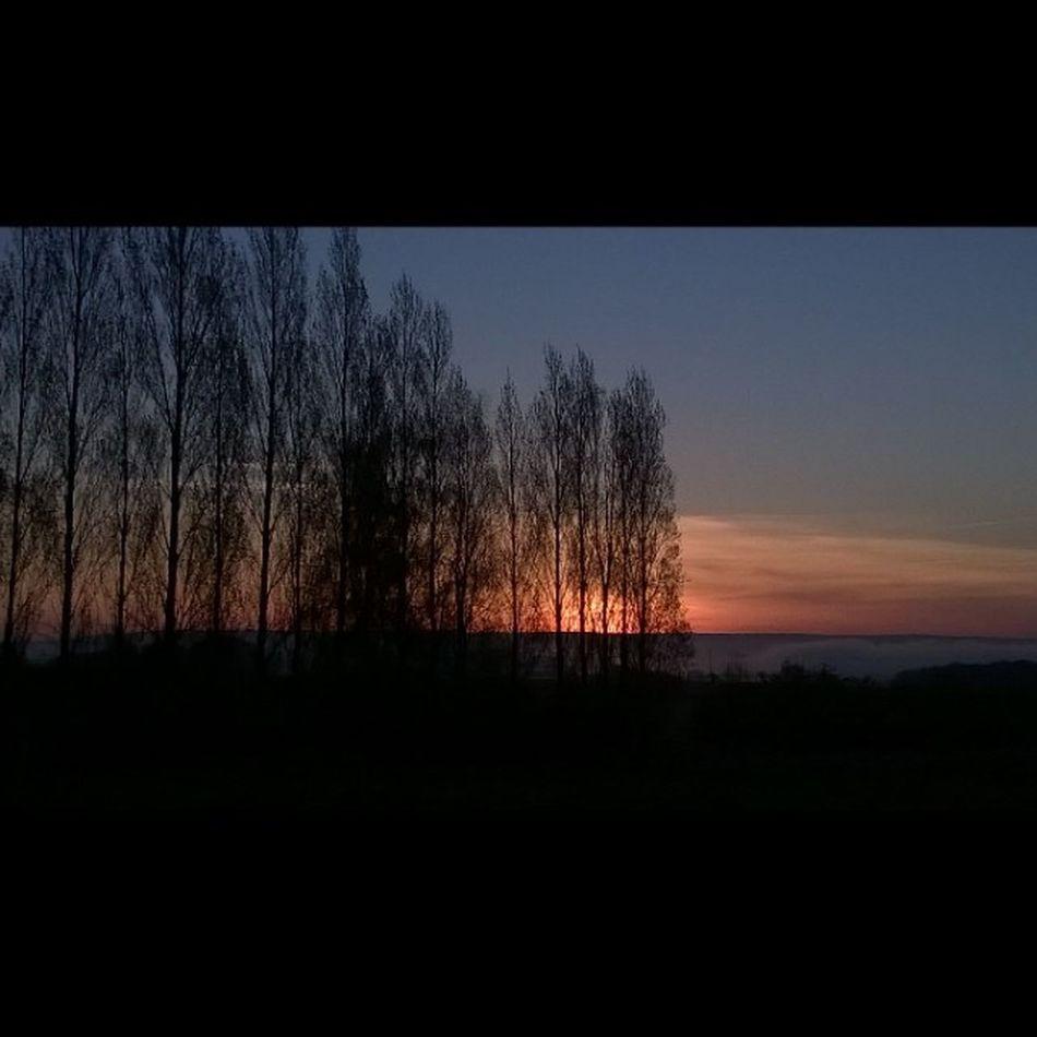Sunrise Leverdesoleil Fog Brouillard Countryside Campagne Taupont Morbihan Miamorbihan Bretagne Breizh Jaimelabretagne Bretagnetourisme Nature Trees Arbres Sun Soleil