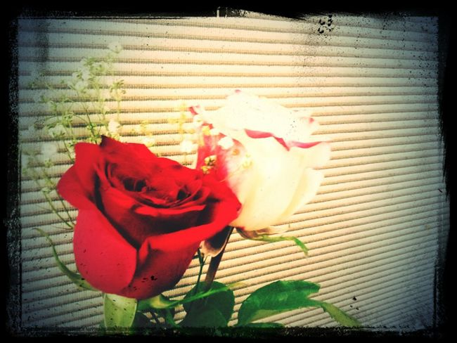 Flowers for me like dictionary... Full of words.and meanings.
