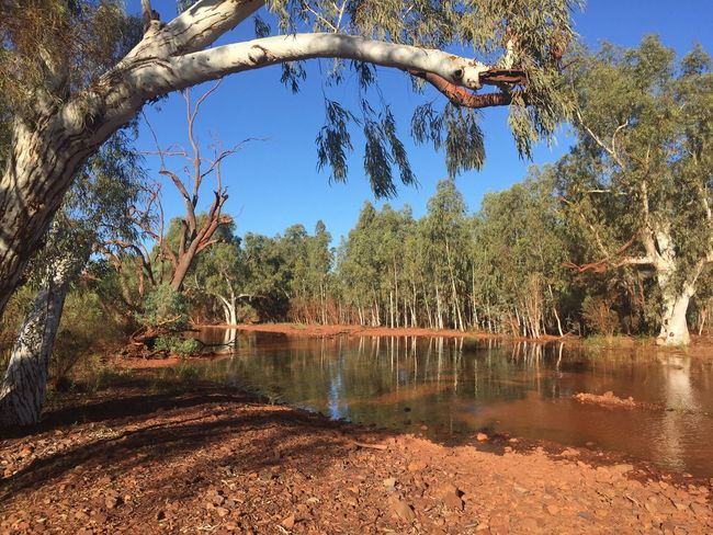 Beauty In Nature Tree Outdoors Western Australia Tranquil Scene Landscape No People Water Flooded