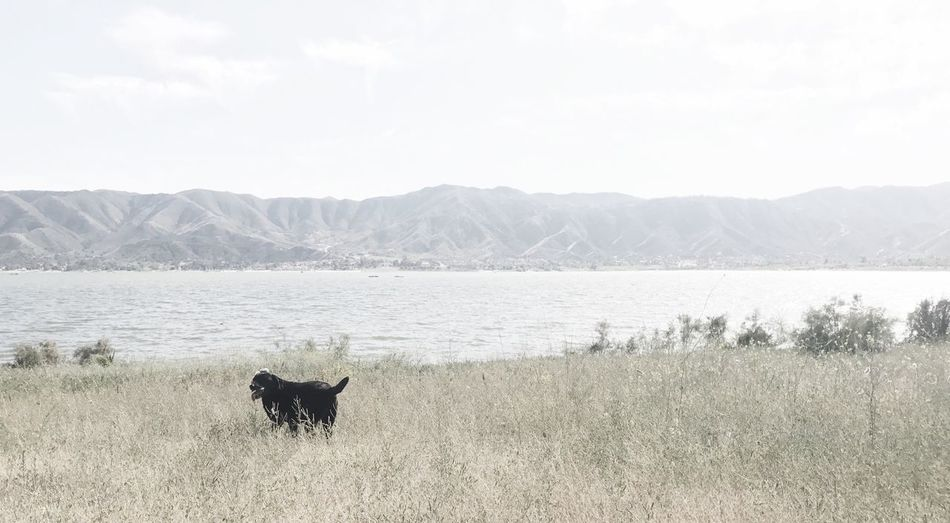 EyeEm Selects Peaceful One Animal Nature Lake Outdoors Animal Themes Mountain No People Day Mountain Range Mammal Grass Water Landscape Sky Beauty In Nature Blacklabrador EyEmNewHere Beauty In Nature Charms Tranquility