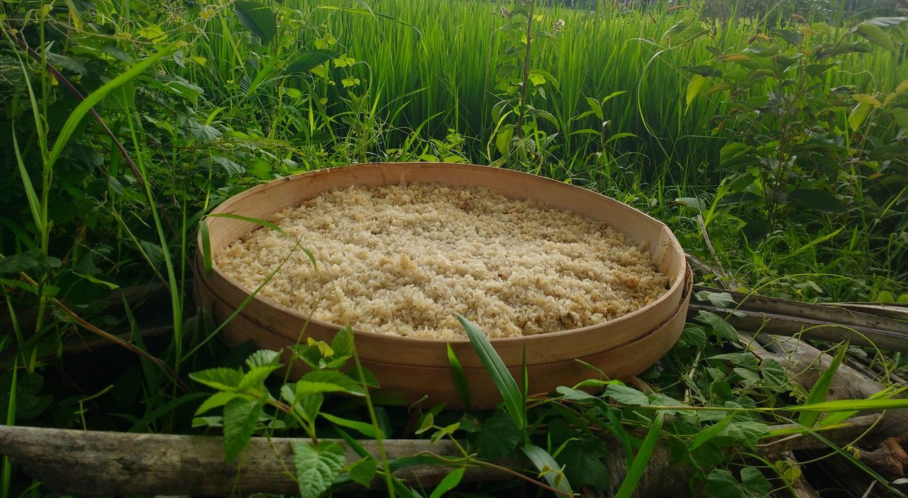 Rice that was just harvested in Bali. Grass Nature Green Color No People Growth Plant Field Outdoors Freshness Day Close-up Ricepaddy Bali, Indonesia Bali Island Balinese Life Balinese Culture Travel Landscape Crop  Field Tradition Beauty In Nature Ubud