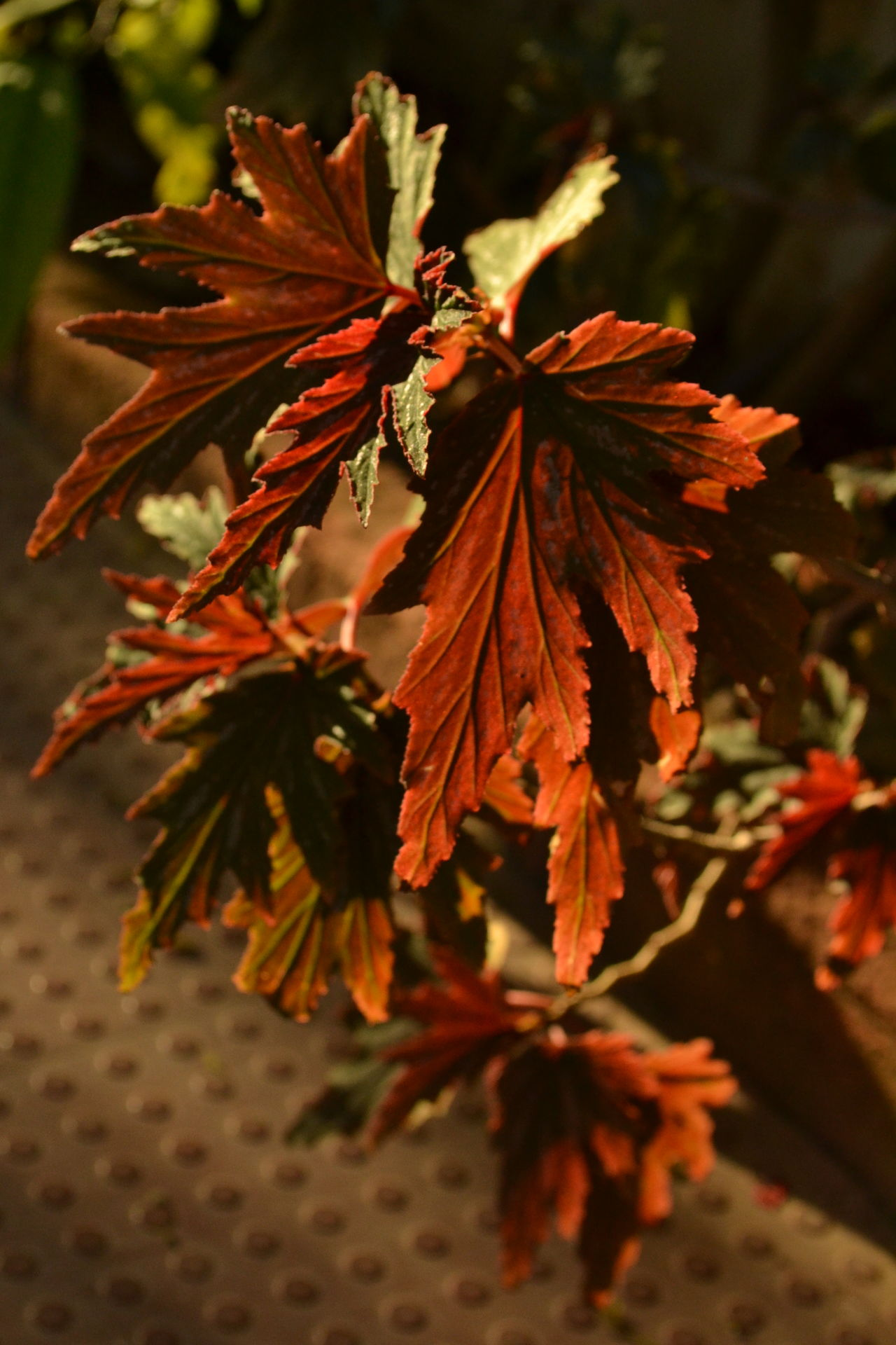 Bare beauty. #autumn #evening #eyeem Gallery #eyembestshot #home #incredible #love #Natural #Nature  #NoFilter #so Beautifu #springtime Close-up Growth Leaf Outdoors Plant Red Springtime Stem