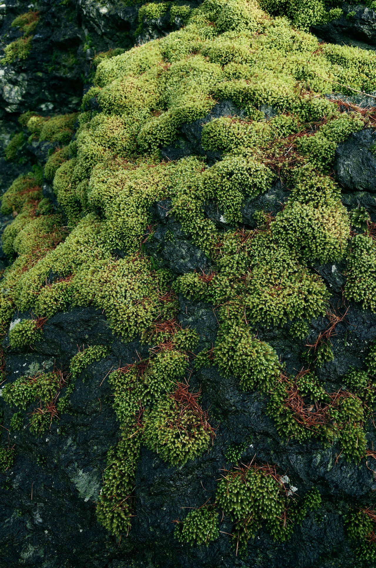 Backgrounds Beauty In Nature Close Up Close Up Nature Close-up Forest Freshness Green Color Growth Moss Mossporn Nature Outdoors Pattern Pattern Pieces Patterns Patterns In Nature Remote Location Rocks Rural Spring Vegetation Moss Close Up Vegetation Textures Moss & Lichen