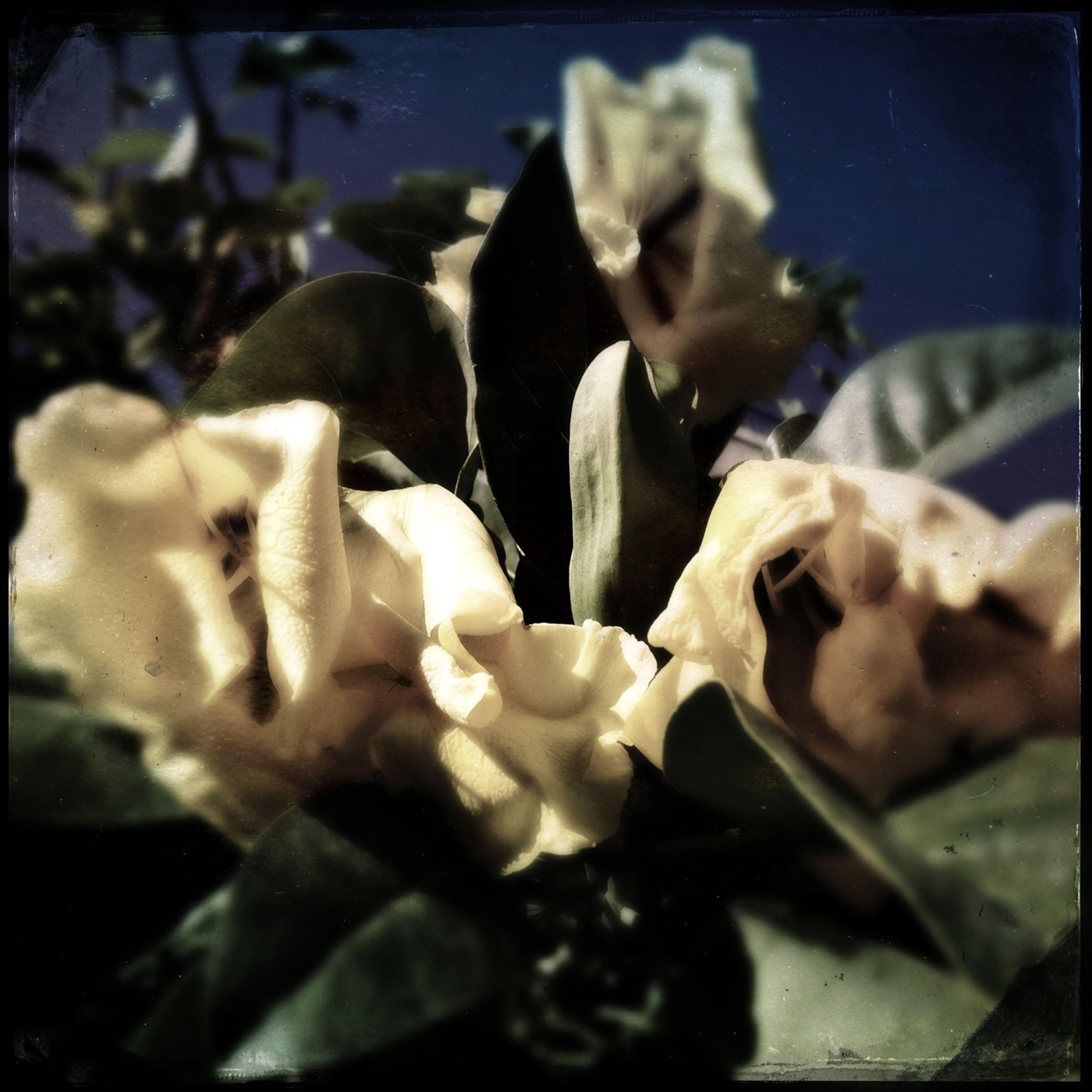 Like A Bouquet