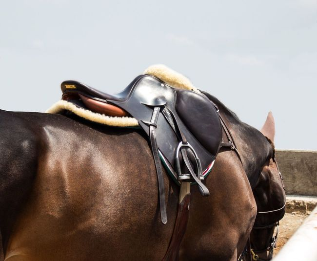 Horse Photography  Horse Horseback Riding Sky Horse Show Saddle Mexico City Mexico Ranch Equine Equestrian Equine Photography Equestrian Life