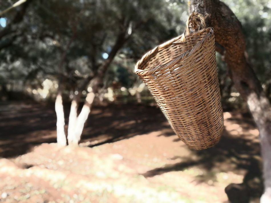 typical Moroccan basket Basket Branch Close-up Day Focus On Foreground Fragility Growth Handmade Natural Nature No People Outdoors Tree Typical Wicker