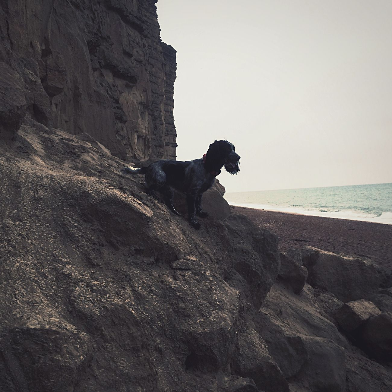 Molly looking out to sea while sitting on a dinosaur on the Jurassic coast