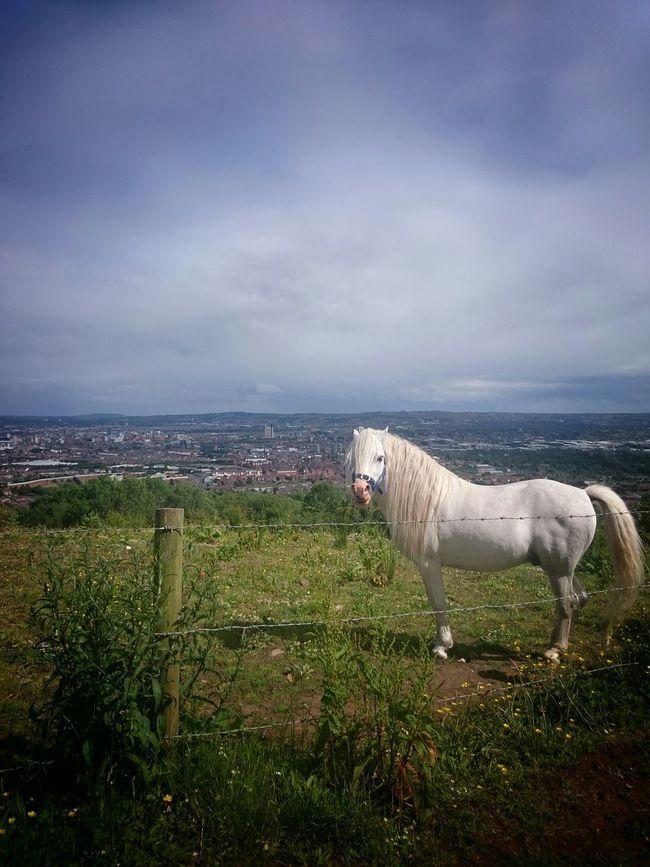 Horses Horse Taking Photos Nice Views EyeEm Gallery Northern Ireland