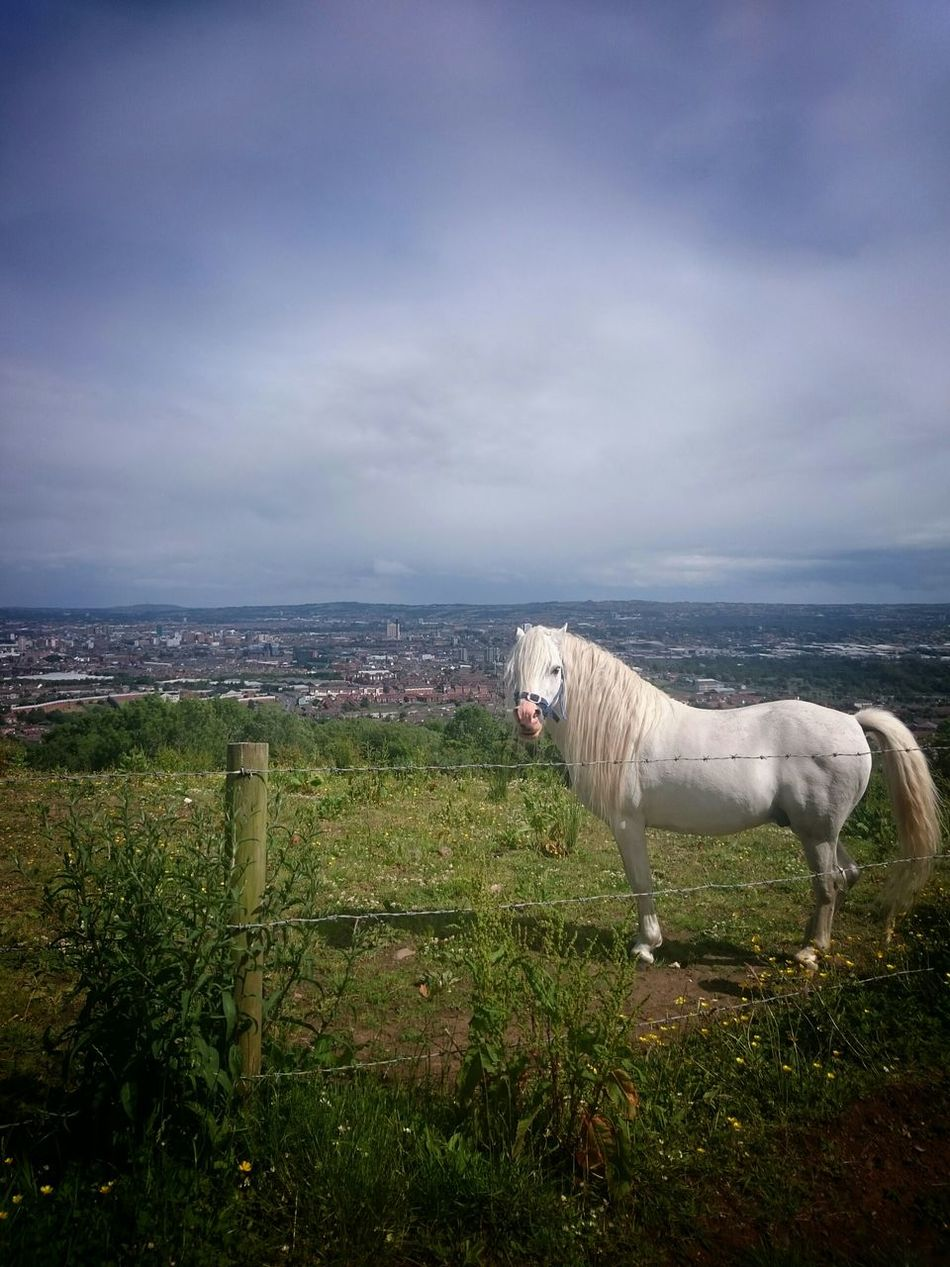 Horses Horse Taking Photos Nice Views EyeEm Gallery Northern Ireland
