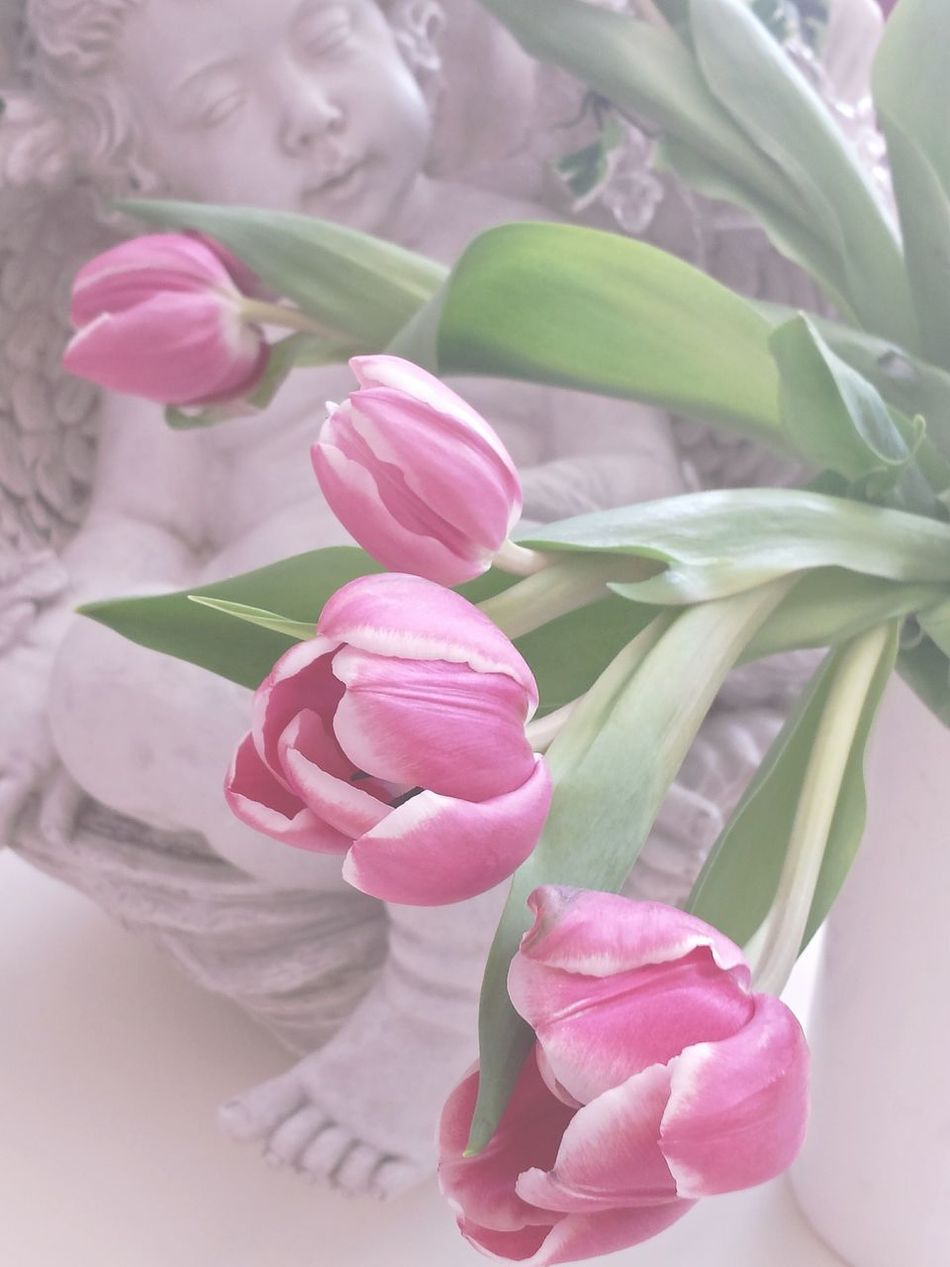 Angel Tulips Siamese Tulip Pastel Pastel Colors Pastel Power Pink Pink Tulips Angel Statue Putte Tulips Flowers Tulips In A Vase Tulpen In Vase against Engel im hintergrund, Romantisch Angels ANGELO Engelfigur mit Tulpen im vordergrund. Pastel Colours Pastell Ladyphotographerofthemonth