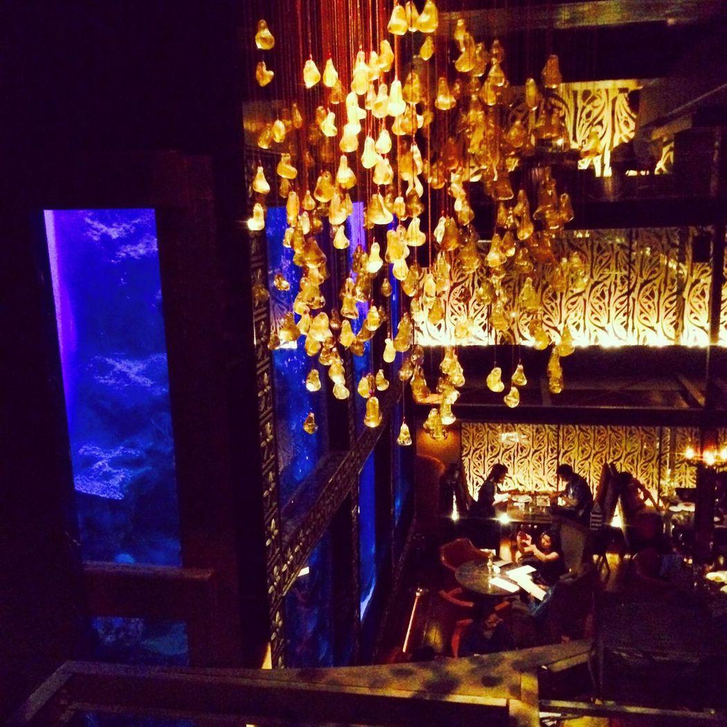 Luxis aquarium Japan Holiday Food Luxis