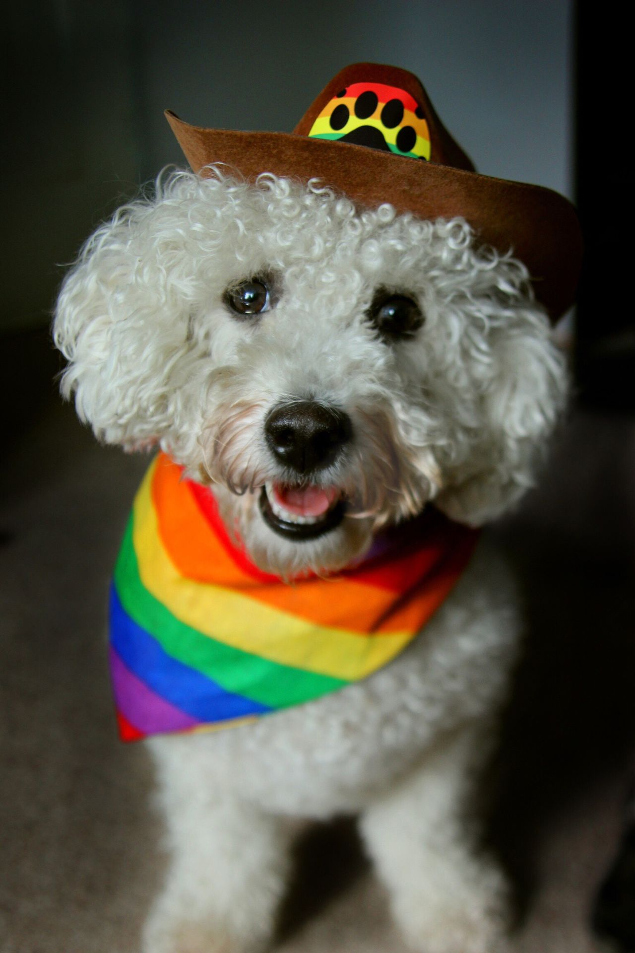 Dog Cute Rainbows Cowboy Cowdog Happy Pride Unique Fun Joy White Dog Fluffy Pets Dog Clothes Dog Outfit Bichonfrise Colors and patterns My Year My View