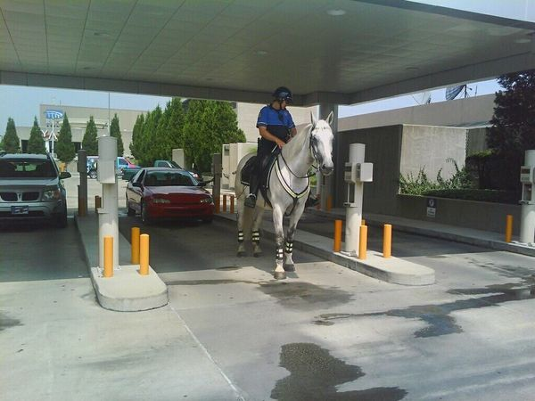 Adapted To The City mounted police horse drive thru banking Car Adult Outdoors