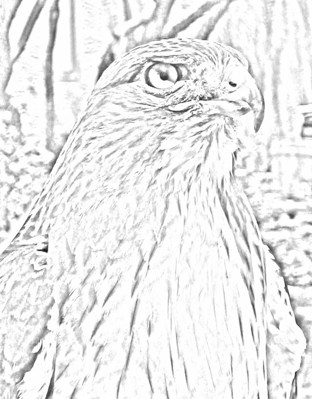 Animal Themes Animal Wildlife Animals In The Wild Beak Bird Bird Of Prey Close-up Day Nature No People One Animal Outdoors Owl