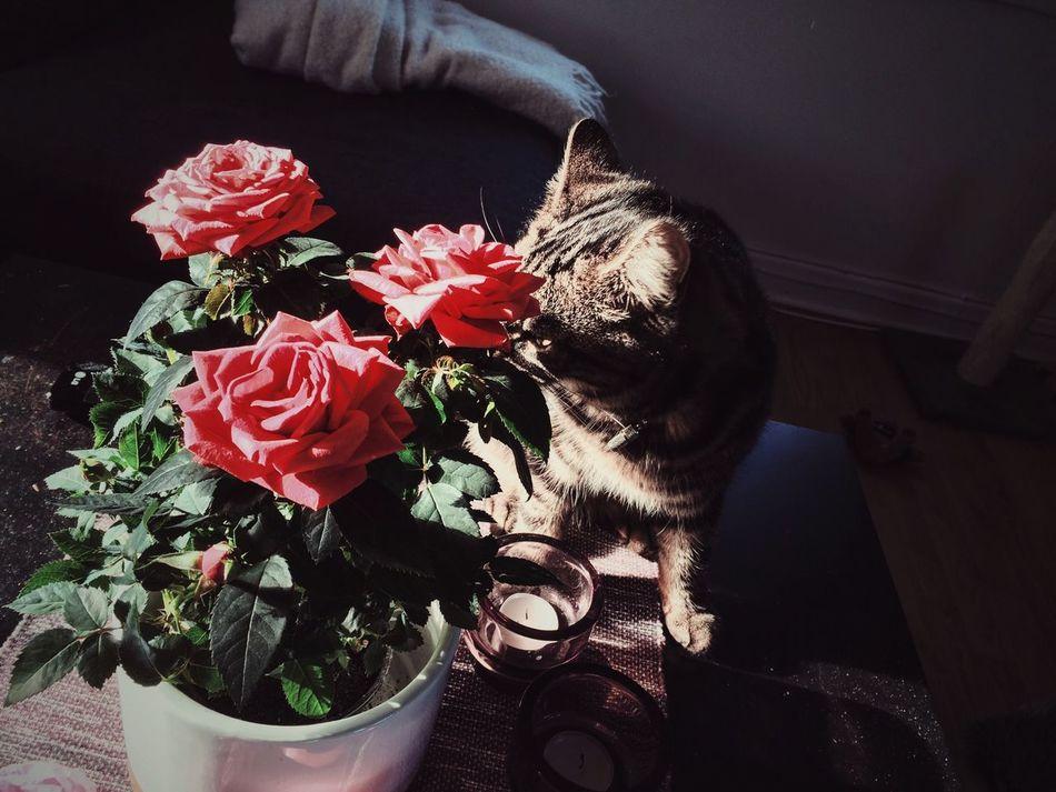 Beautiful stock photos of roses, Animal Themes, Carnivora, Close-Up, Day