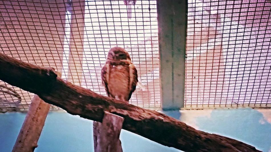 Owls💕 Owllife Owl Owlish's Life. Owl Zoo Animals  Zoo Owl Zoo Day
