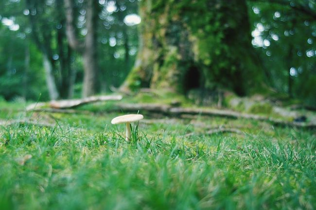 Fairyland Growth Green Color Nature Grass Tree Day Forest Outdoors No People Beauty In Nature Autumn Fall Mushrooms Depth Of Field Focus On Foreground Landscape Focus Object