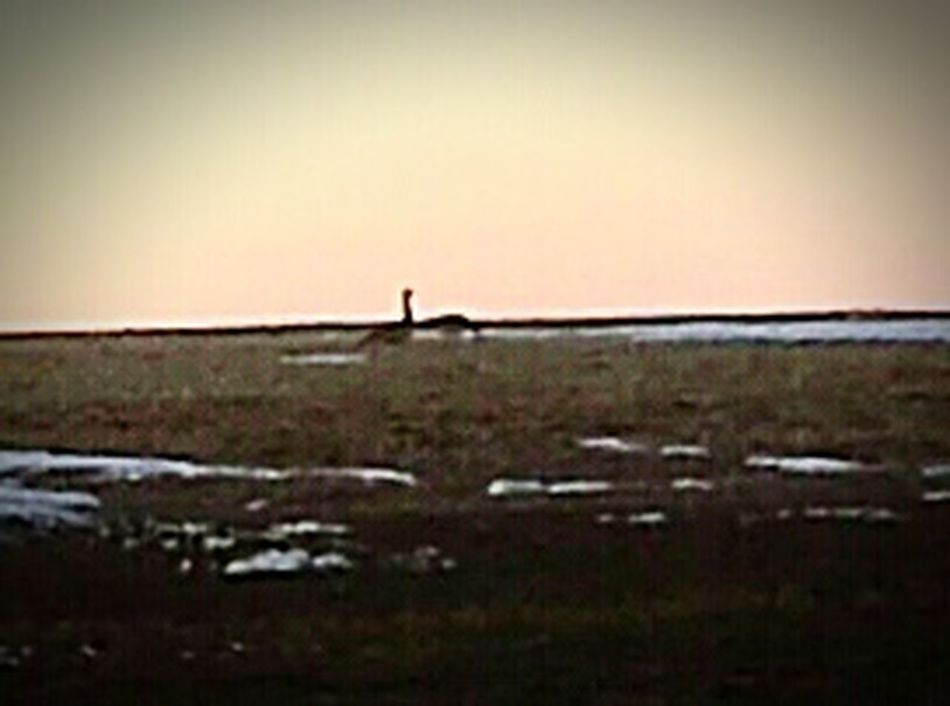 Here's a photo of two geese that are eating what they can find . They're are in a field down the road near my home !