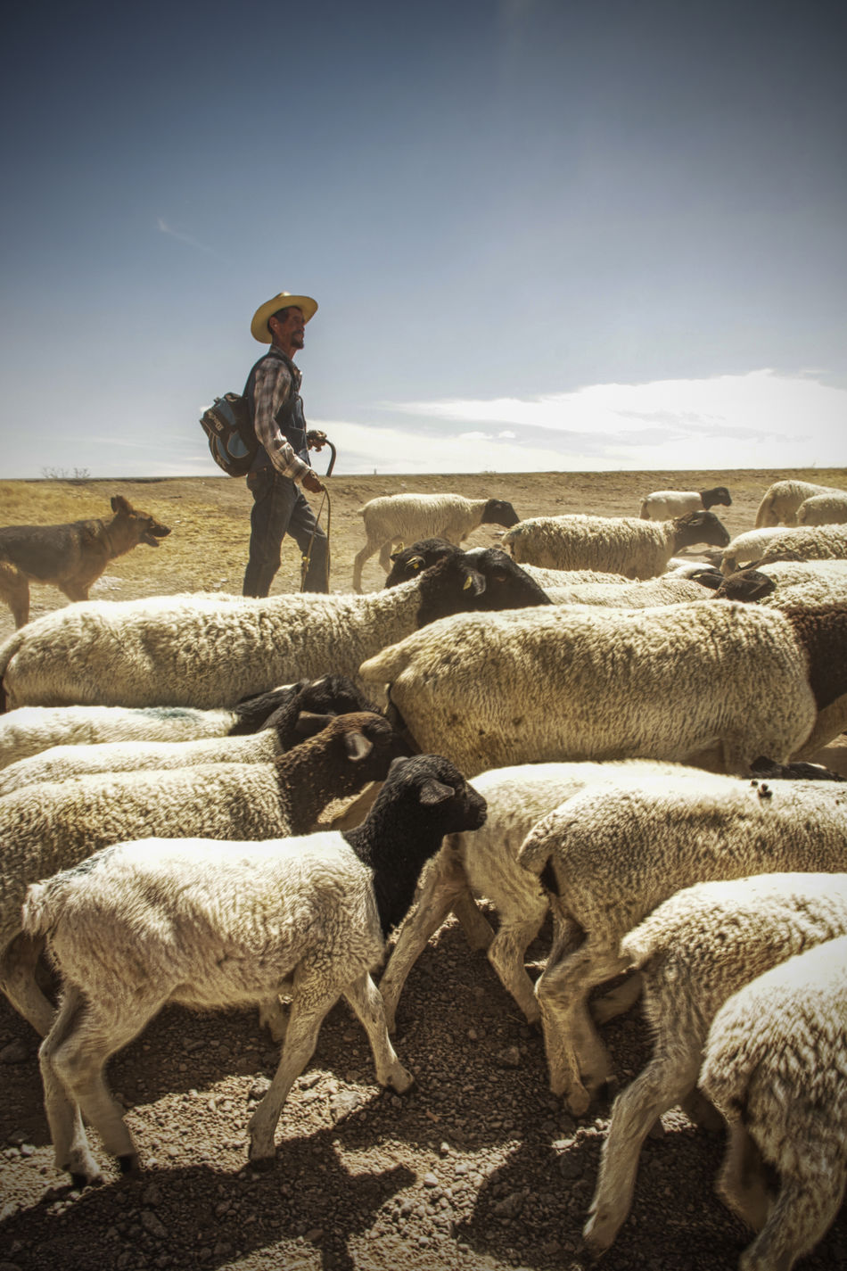 SHEPERD Agricultor Agriculture Campo Dog Pastoraleman Man Ovejas Ovejas Para Dormir Pastor Sheep Sheeps Shep Sheperd Shepherd