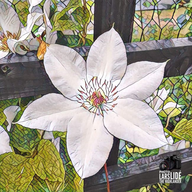 Flower art. Pictureoftheday Taking Photos Enjoying Life Photo Awesome Hello World ArtWork Hanging Out Flower Collection Nature On Your Doorstep
