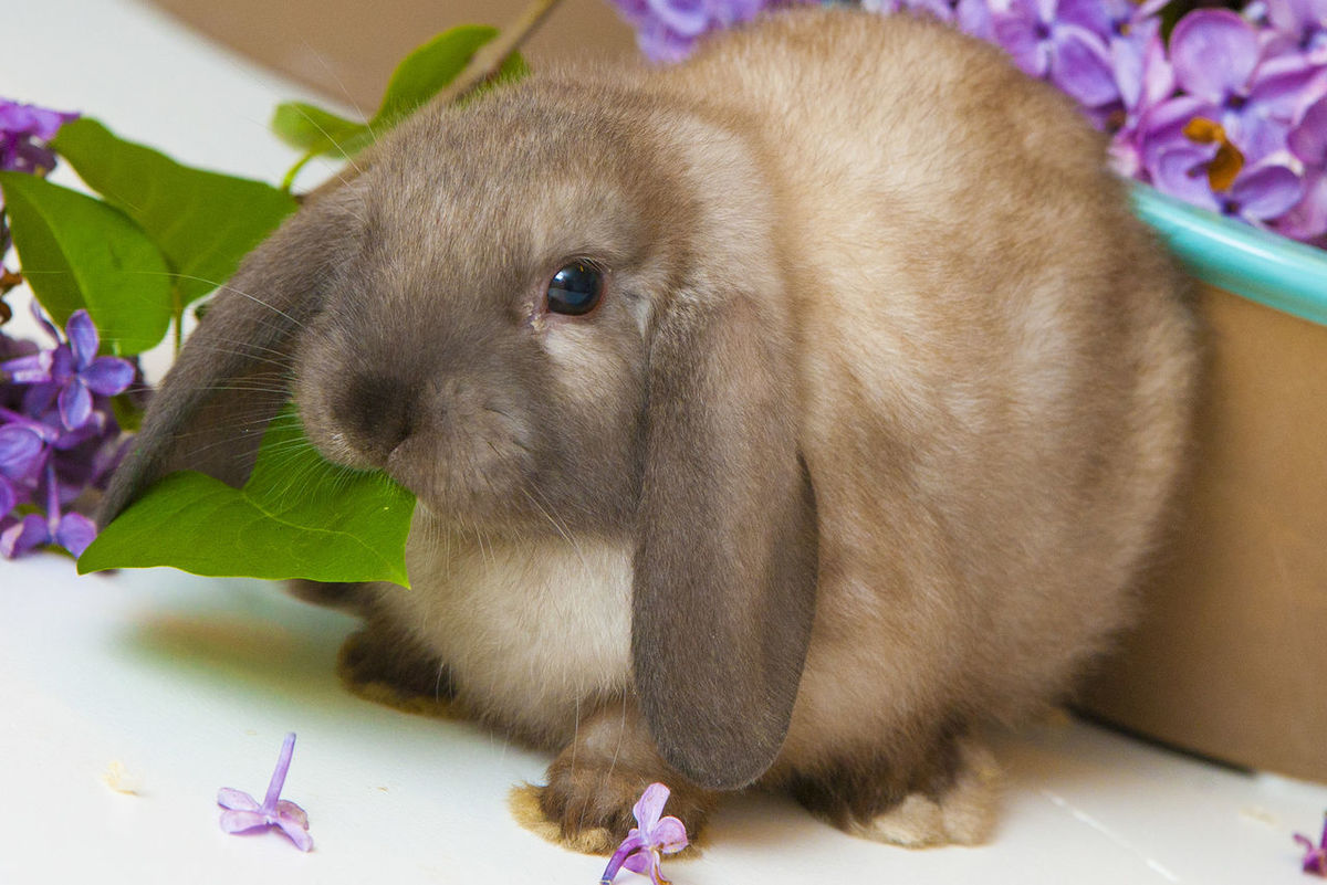 Small Rabbit Animal Themes One Animal No People Close-up Nature Indoors  Day Rabbit Small Young Cottontail studio shot Paris ❤ France 🇫🇷 Pet Portraits