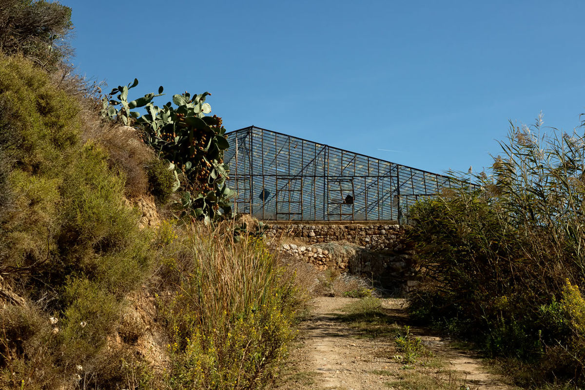 Abandoned Greenhouse Cactus Flower Cactus Plant Path Perspectives On Nature Shrubs Turkey Architecture Aydıncık Built Structure Cactus Pear Clear Sky Dirt Road Environment Glass - Material Glass Greenhouse Greenhouse Growth Nature Outdoors Pathway Plant Sky