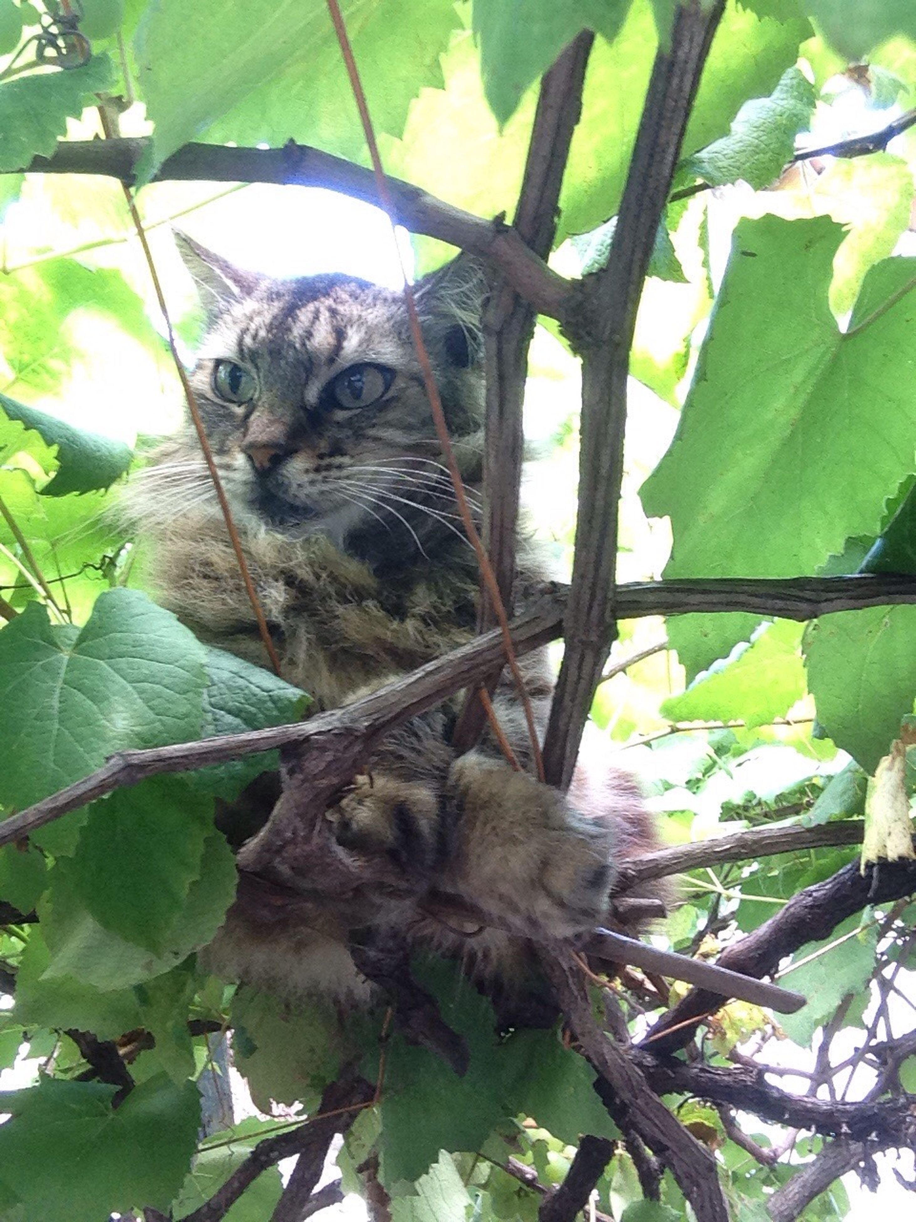 leaf, animal themes, looking at camera, plant, green color, domestic cat, growth, one animal, tree, nature, day, mammal, no people, portrait, outdoors, feline, animals in the wild, branch, close-up