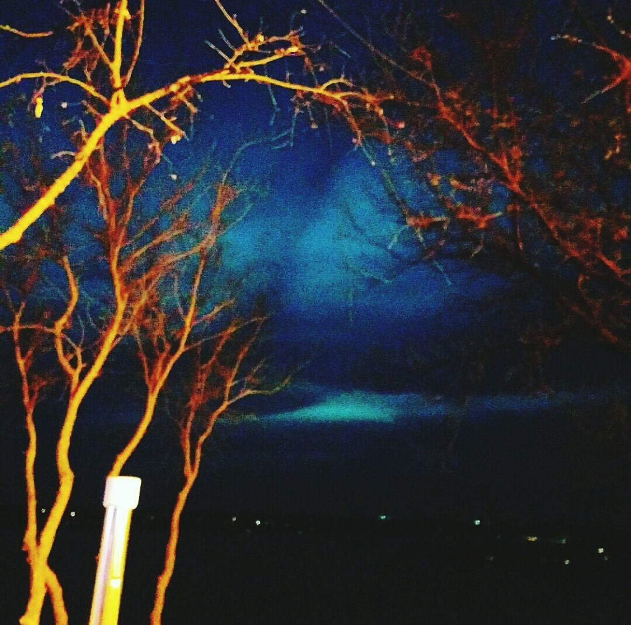 night, no people, nature, beauty in nature, outdoors, scenics, illuminated, sky, tree, close-up