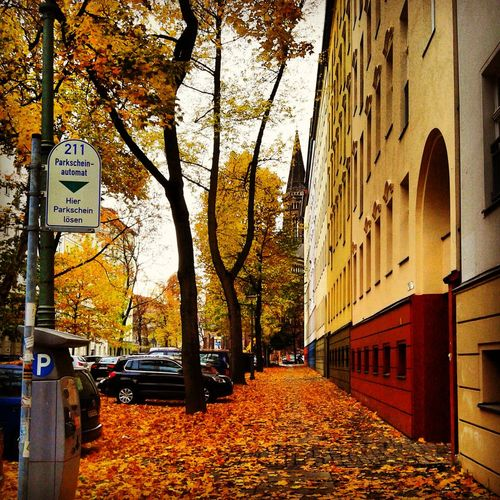close to be wintered Berlin Autumn Winter Morning