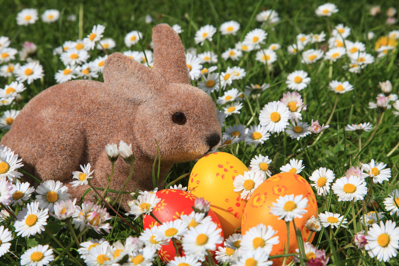 Easter bunny and painted Easter eggs on a daisy meadow Beauty In Nature Close-up Daisy Day Easter Easter Bunny Easter Egg Flower Flower Head Flowerbed Fragility Freshness Grass Grass Growth Holiday Mammal Nature No People Outdoors Petal Plant Springtime Tradition Wildflower