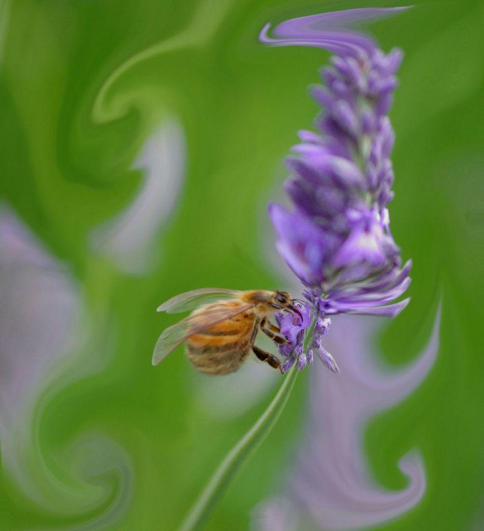 Edit Junkie Abstract Art Funny Edits Nature On Your Doorstep Enjoying Life Blumblebee Lavender